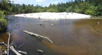 Blackwater-River-State-Park:-Munson-Highway-Bridge_01.jpg:  driftwood, logs, forest, sand bar, switchback, stump, bathers, swimming hole,