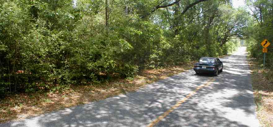 Blackwater-River-State-Park:-Munson-Highway_01.jpg:  winding road, curve ahead, forest, park, tunnel of trees, blackwater forest, ,