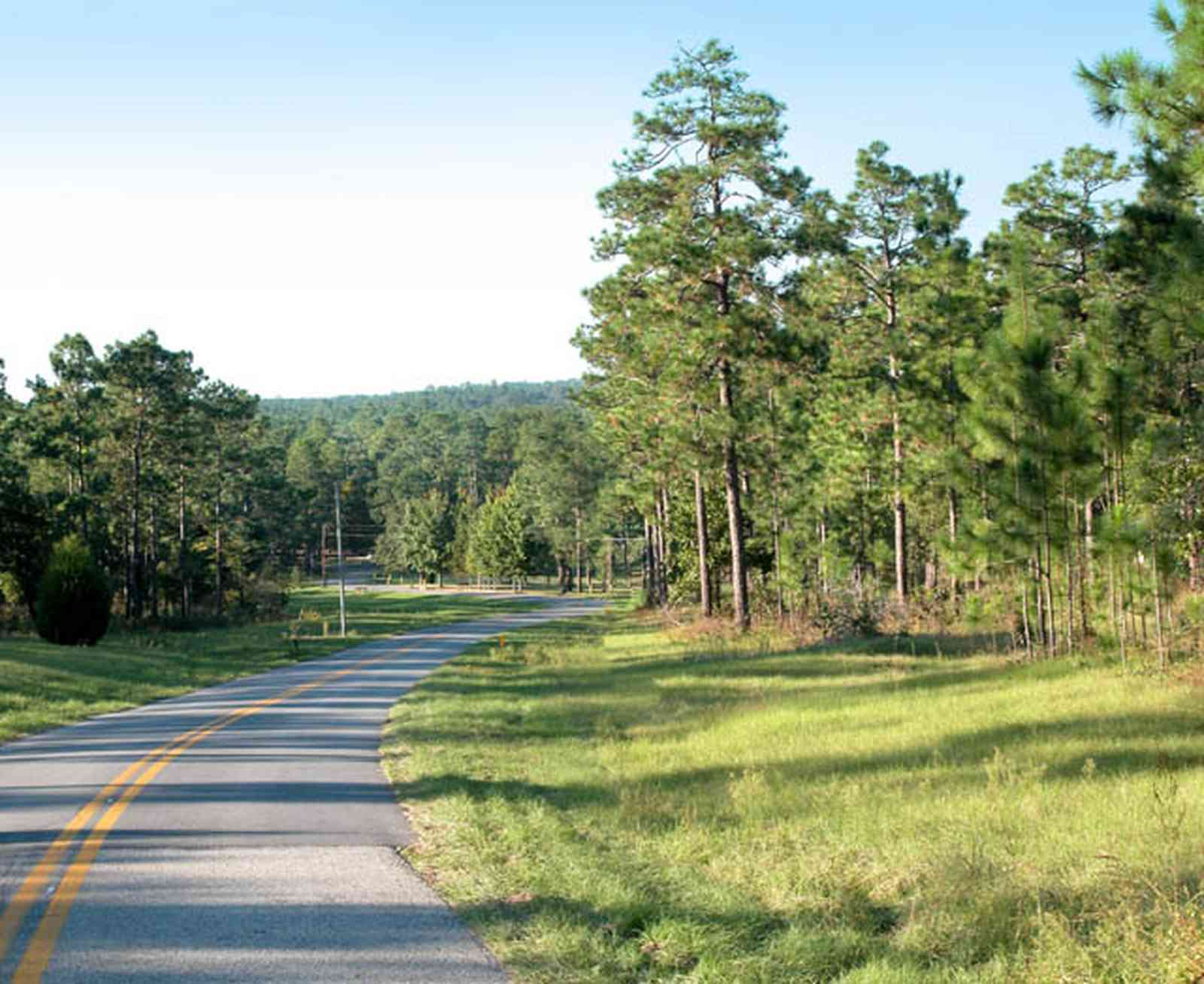 Blackwater-River-State-Park:-Pine-Forest_14.jpg:  pine tree, long leaf pines, two-lane road, country road, river basin, creek