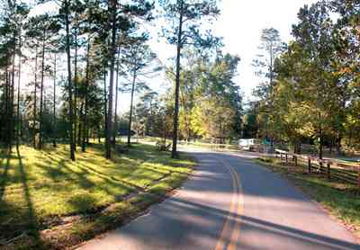 Blackwater-River-State-Park:-Pine-Forest_15.jpg:  two-lane road, country road, stables, recreational area, state park, creek, pine tree, long leaf pines