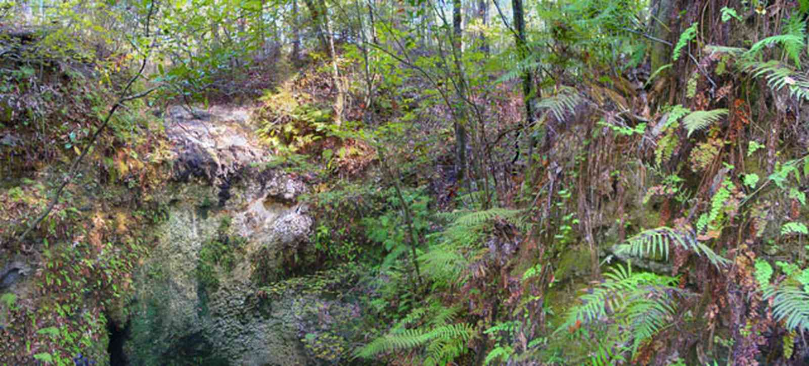 Chipley:-Falling-Waters-State-Park_02.jpg:  waterfalls, fern, sink hole, limestone rocks, upland pine forest