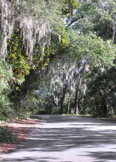 Gulf-Breeze:-Shoreline-Park-South_03.jpg:  spanish moss, oak trees, park, country road, two-lane road,