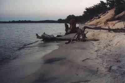 Gulf-Islands-National-Seashore:-Butcherpin-Cove_driftwood-1.jpg:  driftwood, stumps, beach, cove, pensacola bay, gulf coast, gulf of mexico, gulf breeze