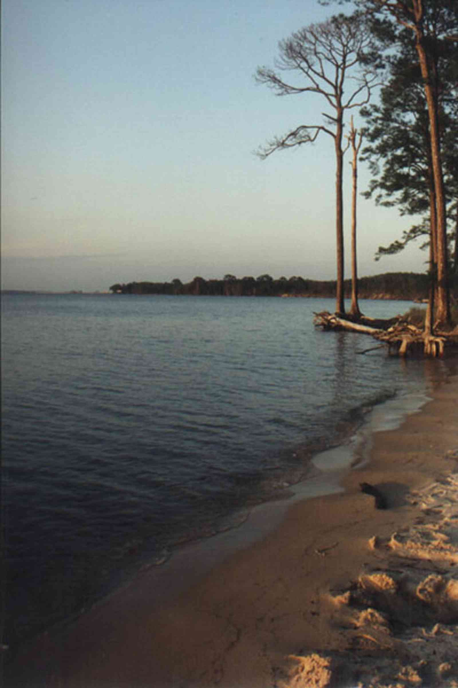 Gulf-Islands-National-Seashore:-Butcherpin-Cove_trees.jpg:  gulf coast, gulf of mexico, pensacola bay, short-leaf pine tree, bay, sand, sound