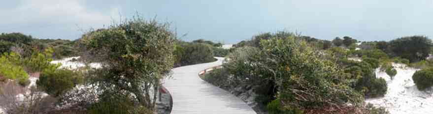 Gulf-Islands-National-Seashore:-Dunes-Nature-Trail_02.jpg:  walkway, boardwalk, gulf of mexico, dunes, quartz sand, national park service, oak trees