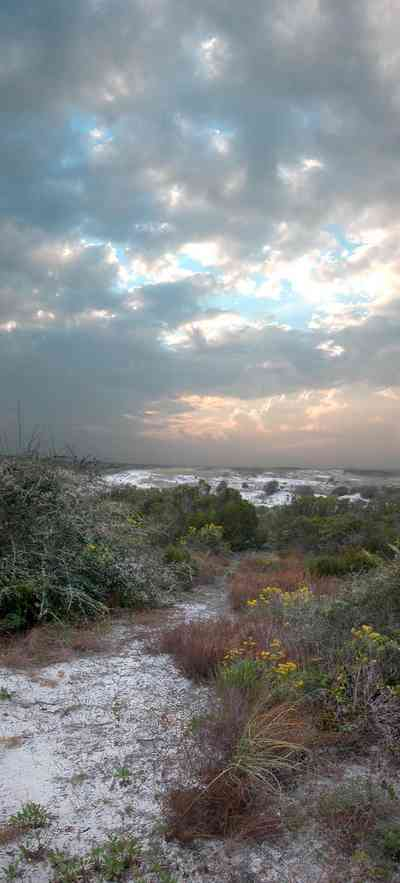 Gulf-Islands-National-Seashore:-Fort-Pickens:-Dunes_14.jpg:  sand, dunes, cacti, sunset, beach, santa rosa island