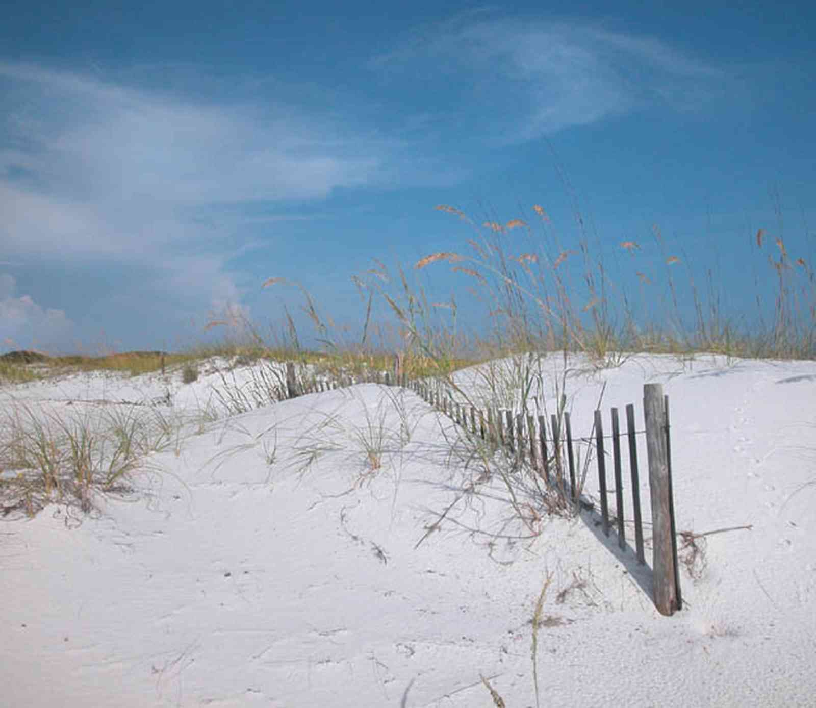 Gulf-Islands-National-Seashore:-Langdon-Beach_25.jpg:  dunes, sea oats, dune fence, quartz sand, gulf of mexico, barrier island