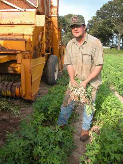 Hollandtown:-Holland-Farm:-Peanut-Picking_02.jpg:  peanut farm, farmland, harvest, boiled peanut, combine, sheller, root crop, oak tree, santa rosa county,