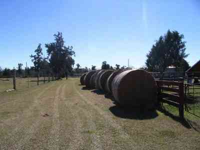 Leaning-Post-Ranch_02.jpg:  pine trees, hay bales, ranch,