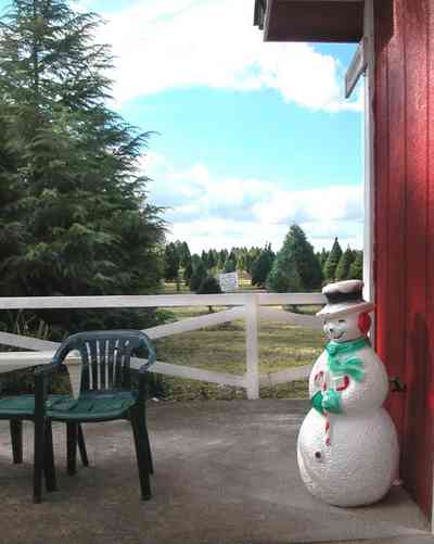 Milton:-Christmas-Tree-Farm_05.jpg:  christmas tree, fir tree, cumulus clouds, cedar tree, row of trees, dirt road