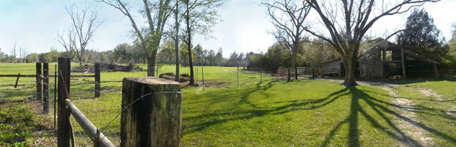 Milton:-Green-Goat-Farm_01b.jpg:  fence, pecan tree, goat, barn, post