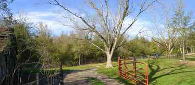 Milton:-Green-Goat-Farm_01c.jpg:  pecan tree, gate, goat farm, old barn, shed, shelter
