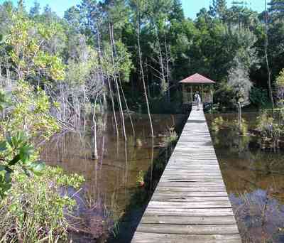 Milton:-Pond-Creek_02.jpg:  pitcher plants, cypress trees, pine trees, gazebo, marsh, creek, pond, swamp,