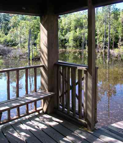 Milton:-Pond-Creek_03a.jpg:  gazebo, dock, pier, deck, marsh, swamp, cedar tree, pine tree