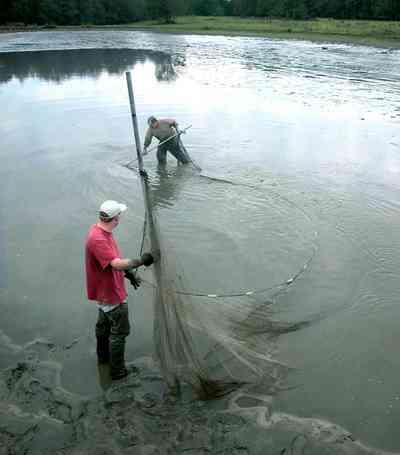 Milton:-Stewart-Farm_05c.jpg:  cast net, shrimp harvest, prawn, shrimp farm, net, lake, pond, fish farm