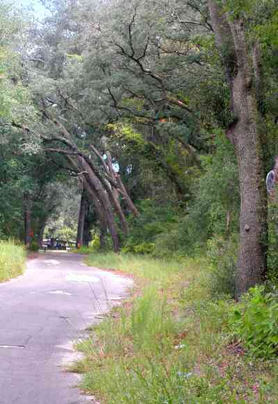 Milton:-Womack-Road_06.jpg:  forest, oak trees, spanish moss, country road, two-lane road