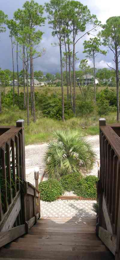 Navarre:-Biscayne-Pointe-Drive-House_08.jpg:  stairs, palm tree, pine tree, wetland, swamp