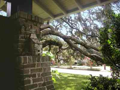 North-Hill:-284-West-Gonzales-Street_13.jpg:  oak tree, craftsman cottage, expansive lawn, brick work, red bricks