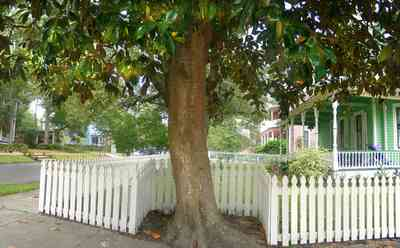 North-Hill:-623-North-Barcelona-Street_03.jpg:  magnolia tree, white picket fence, folk victorian home