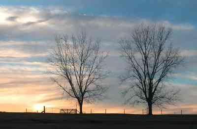 Oak-Grove:-Carpenters-Catfish-Farm_20.jpg:  decidious trees, pecan trees, sunset, catfish farm