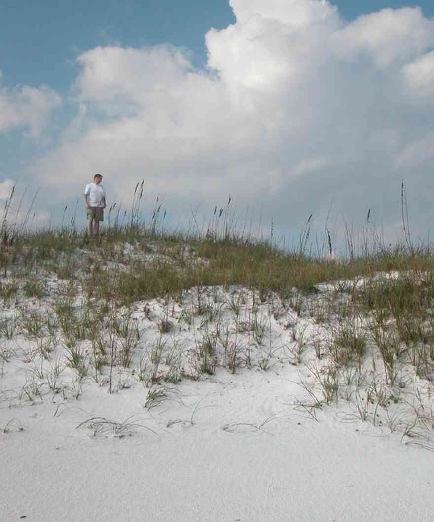 Pensacola-Beach:-Dunes-Portafino_02.jpg:  sea oats, dunes, tom roush, beach,