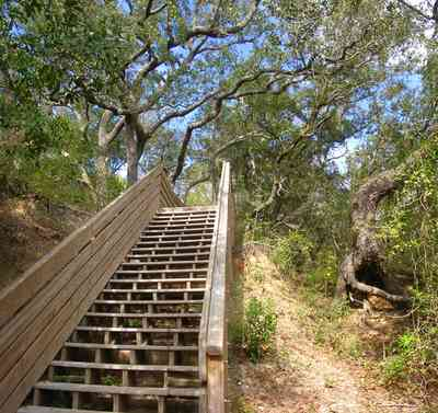 Scenic-Highway:-Bay-Bluffs-Park_03.jpg:  steps, bluffs, cliff, oak trees