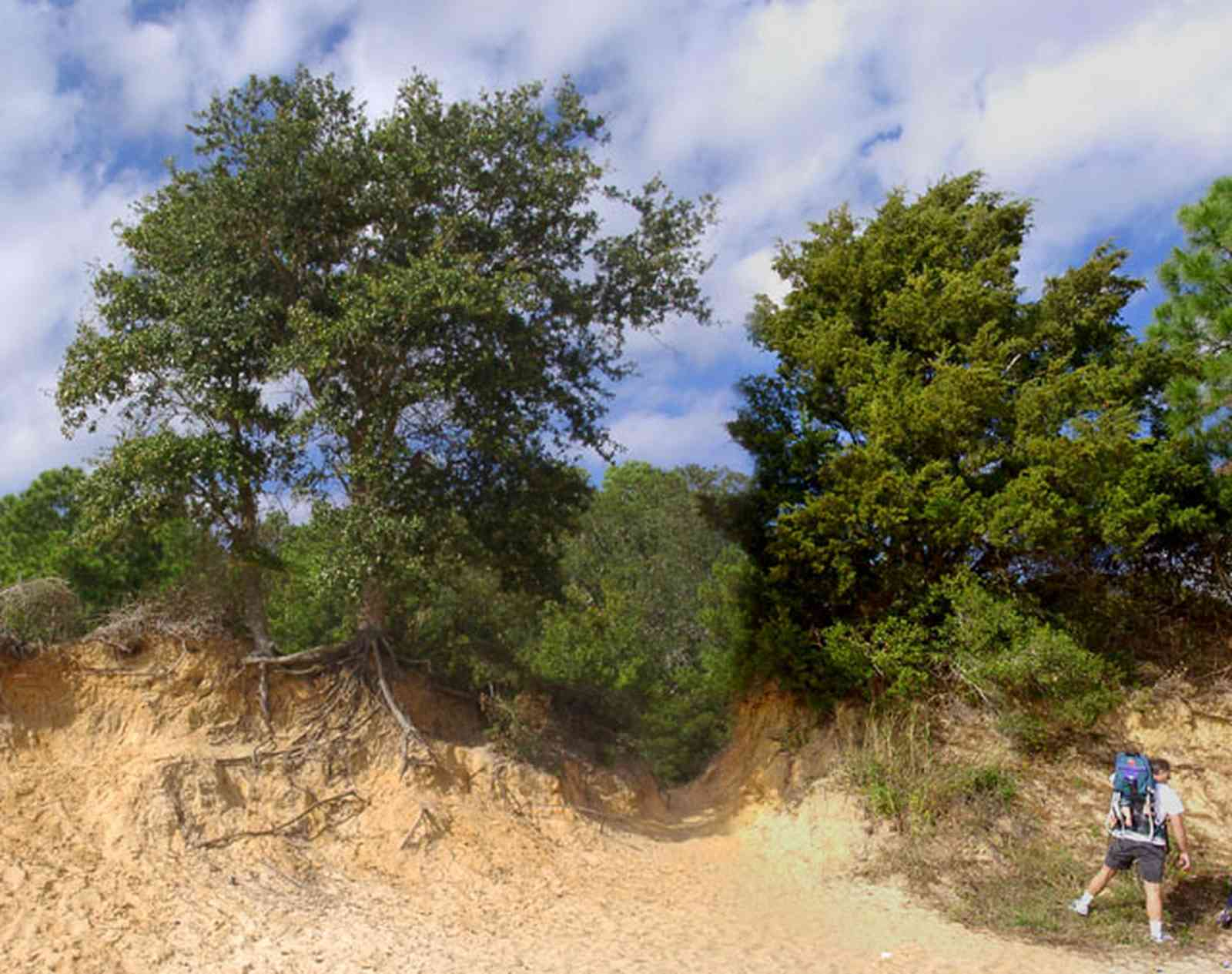 Scenic-Highway:-Bay-Bluffs-Park_05.jpg:  clay bluffs, oak tree, cedar tree, sandy beach, escambia bay