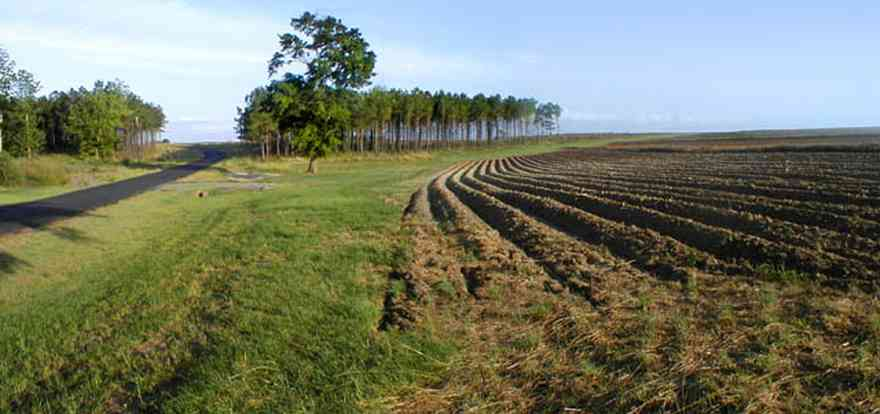 Walnut-Hill:-Gobbler-Road_01.jpg:  field, farmland, farmer, pine trees, curving road, planting, harvest