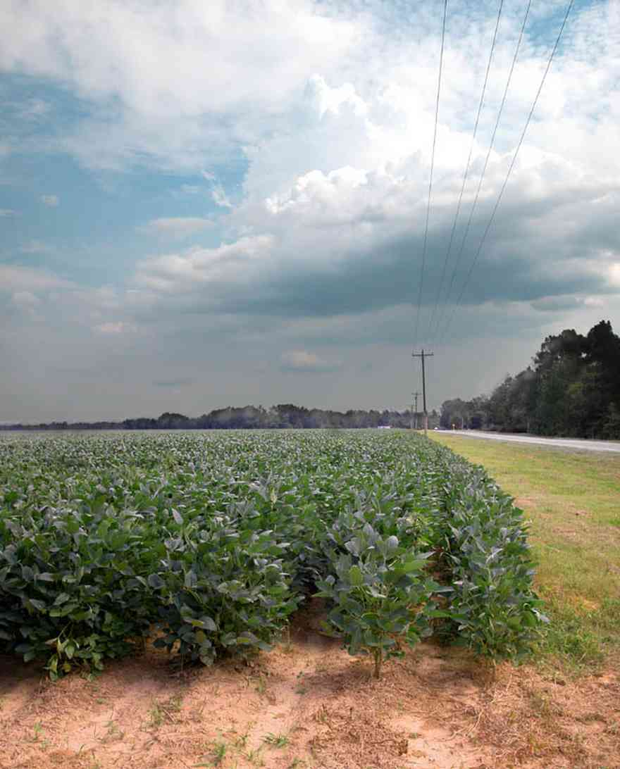 Walnut-Hill:-Highway-97-Soybean-Field_04.jpg:  harvest, crop, row crop, country road, power line, ditch, soybean, bean crop, cumulous clouds, storm, summer rain