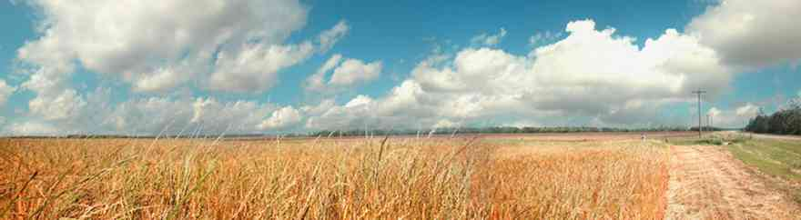 Walnut-Hill-97A-Wheat-Field_02+WEB.jpg:  winter wheat, forage, cover crop, harvest, grain, cereal,