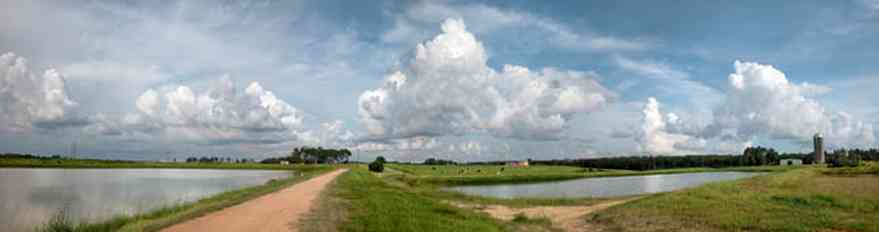 Walnut-Hill:-Kansas-Road:-Dairy-Farm_00.jpg:  catfish ponds, levee, dirt road, country road, silo, dairy farm, cows, cumulus clouds