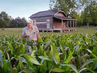 Walnut-Hill:-School_11.jpg:  corn field, farmland, log cabin, one-room school house, pecan orchard, farmer, feed corn, seed corn, silage, sweet corn, farmer dave