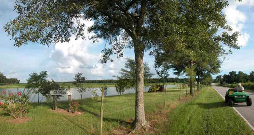 Walnut-Hill:-Solomon-Farm_02.jpg:  fence, country road, two-lane road, oak tree, pond, lake, farm, cotton field