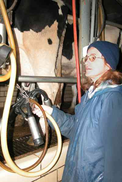 Walnut-Hill:-VanPelt-Farm_12.jpg:  dairy farm, heifer barn, milking barn, corral, fence, farmer, holstein cows, udder, milking machine, suction, farmland