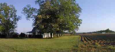 Walnut-Hill:-Ward-Farm_02.jpg:  farmland, craftsman style home, oak tree, magnolia tree, highway 97, corn field, menonite religious community, two-lane road, curving road, escambia county