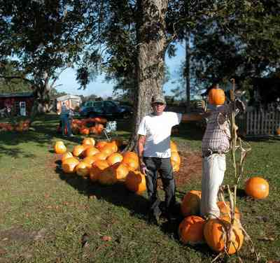 Whitfield-Community:-Whitfield-Farm-Giant-Pumpkin-Patch_02.jpg:  pumpkins, mailbox, picket fence, curbside sales, scarcrow, pumpkin patch, farmer, farming