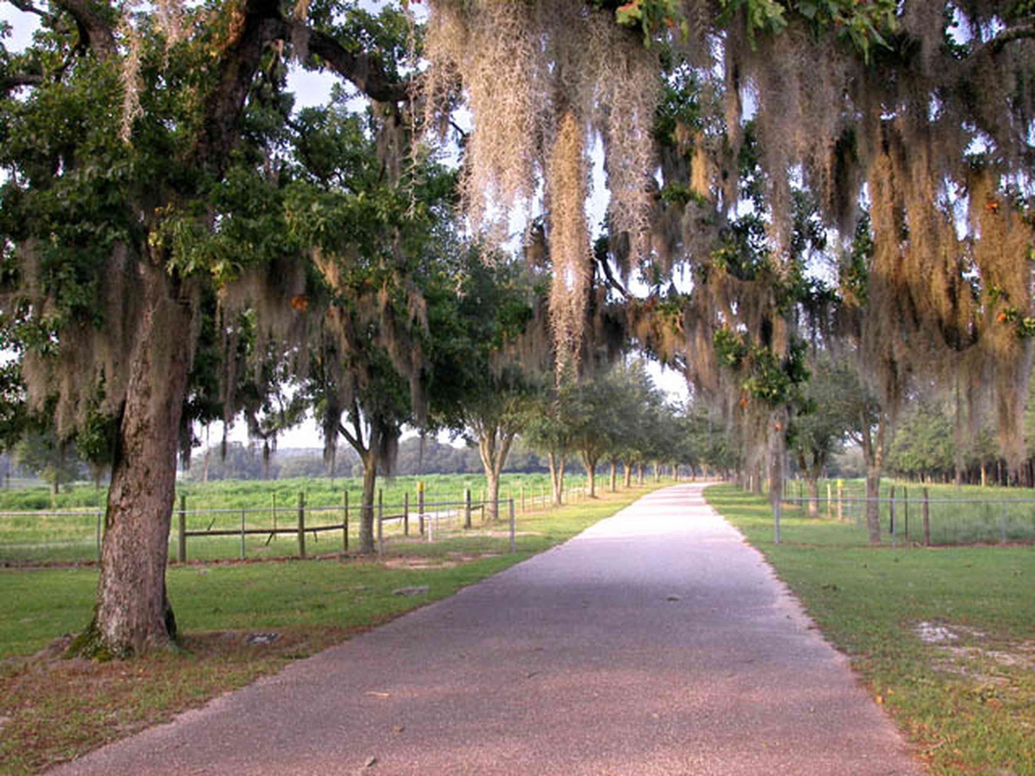 Allentown:-Hopewell-Road_02.jpg:  county road, winding road, spanish moss, narrow winding road, oak tree, pasture land, farm, farmland