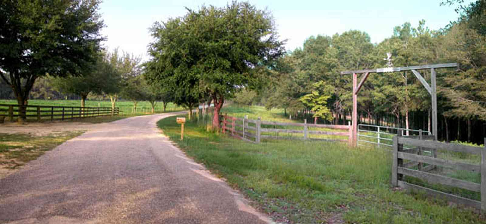 Allentown:-Hopewell-Road_07.jpg:  county road, winding road, spanish moss, narrow winding road, oak tree, pasture land, farm, farmland