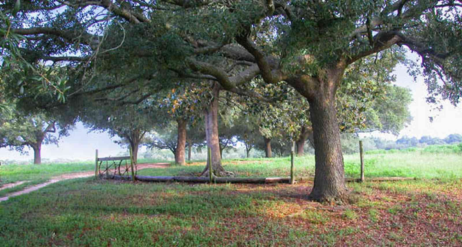 Allentown:-Mathews-Farm_01-copy.jpg:  oak tree, pasture, farmland, farmer, dirt road, winding road