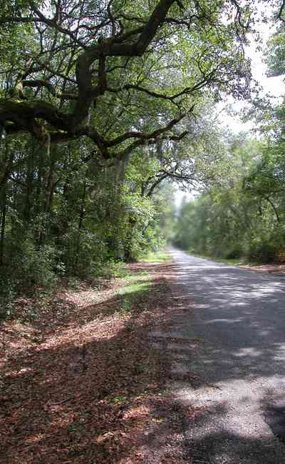 Bagdad:-Cemetery_03.jpg:  oak tree, spanish moss, country road, two-lane road, canopy of trees, dense forest, ,