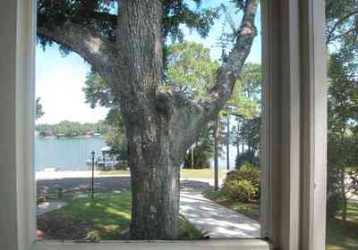 East-Hill:-2109-Whaley-Drive_18.jpg:  oak tree, screen porch, pine trees