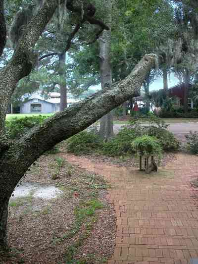 East-Pensacola-Heights:-600-Bayou-Blvd_27.jpg:  oak tree, spanish moss, brick sidewalk, marina, bayou texar