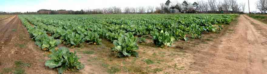 Elberta:-Heil-Farm_03.jpg:  pecan trees, dirt road, highway sign, farm, collard greens, turnip greens, farmland