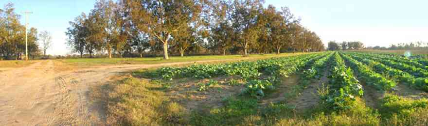 Elberta:-Kleinschmidt-Road-Truck-Farm_02.jpg:  alabama, dirt road, truck garden, pecan trees, farm land