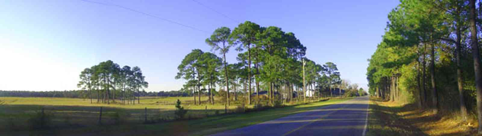 Elberta:-Kleinschmidt-Road-Truck-Farm_04.jpg:  country road, long-leaf pine trees, pasture land, highway, alabama, cattle, grazing