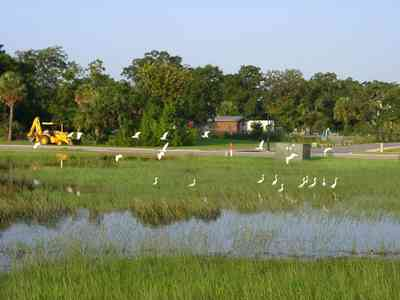 Gateway-District:-Admiral-Mason-Park_05.jpg:  cattle heron, marshland