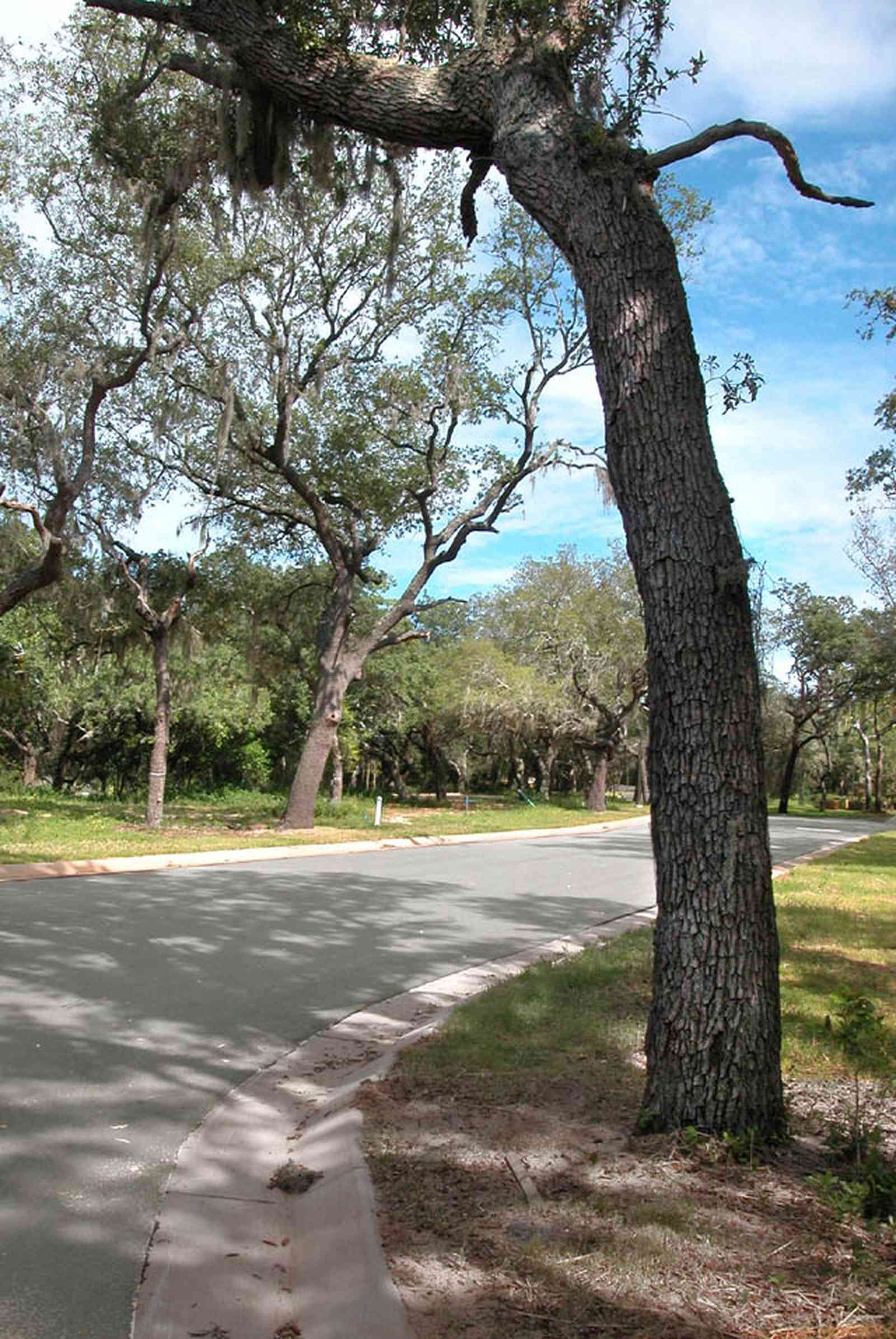 Gulf-Breeze:-Peakes-Point_02.jpg:  oak trees, spanish moss, development, subdivision, pensacola bay, streetscape, canopy of trees,
