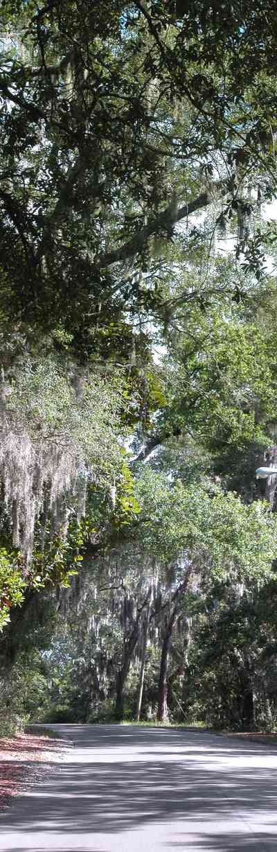 Gulf-Breeze:-Shoreline-Park-South_02.jpg:  spanish moss, oak trees, park, country road, two-lane road