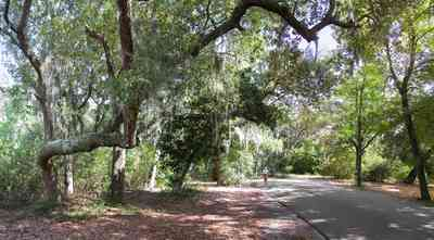 Gulf-Breeze:-Shoreline-Park-South_05.jpg:  spanish moss, oak trees, park, country road, two-lane road