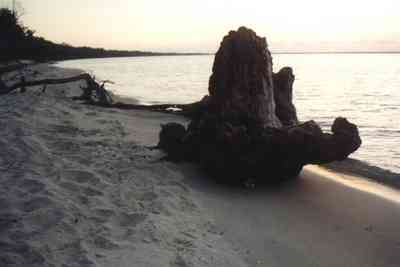 Gulf-Islands-National-Seashore:-Butcherpin-Cove_driftwood-2.jpg:  cove, driftwood, sand, beach, sunset